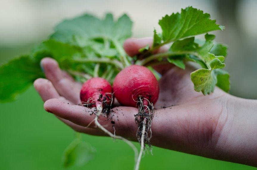 Que jardiner au mois de Juillet?