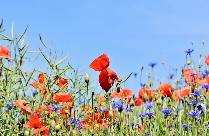 Les fleurs pour parfumerl'environnement